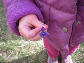 Discovering violets