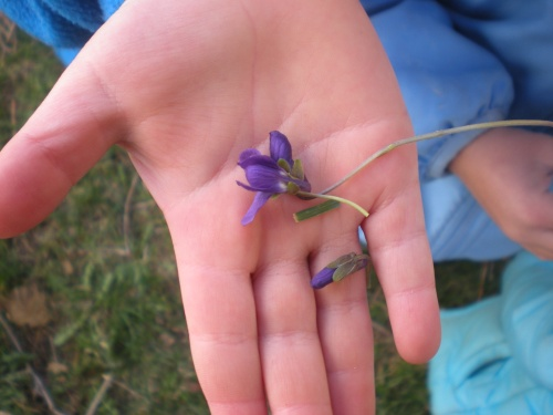 Little hand holding a fresh picked violet